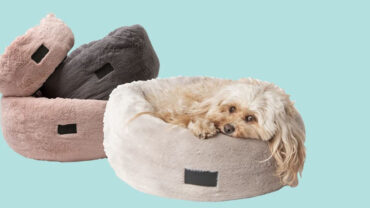 Best Small Dog Bed
