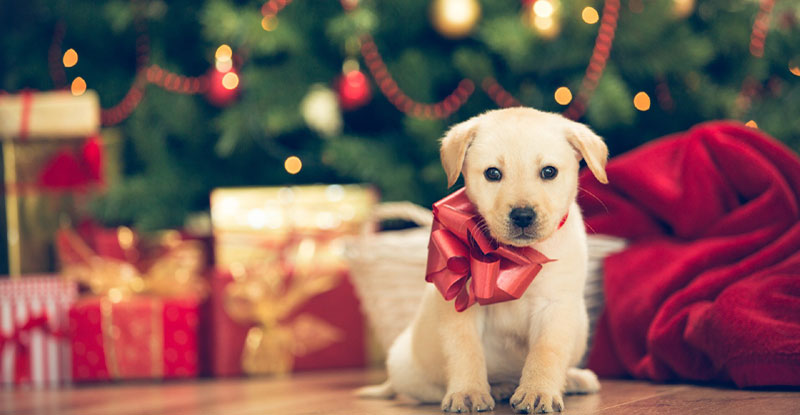 How To Dress Up Your Dog For Christmas