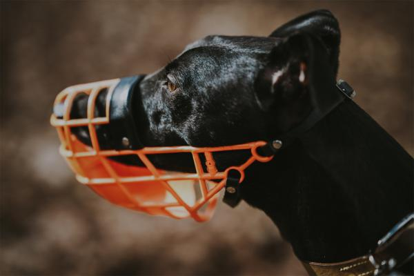 How to Muzzle an Aggressive Dog?